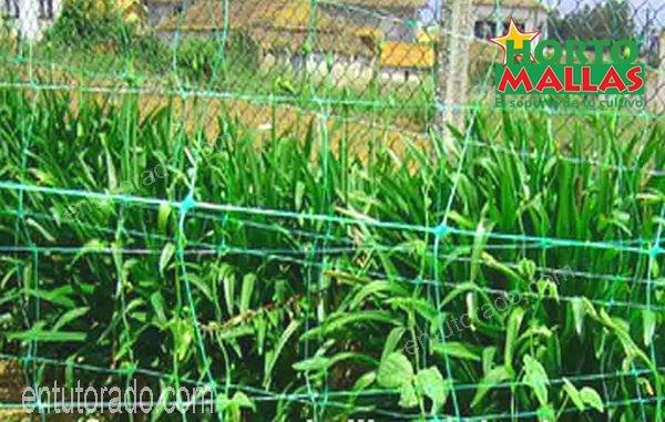 malla tutora en cultivo de hortalizas